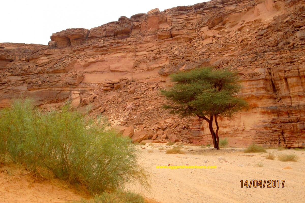 Dream-Tour-Sinai Slide 11