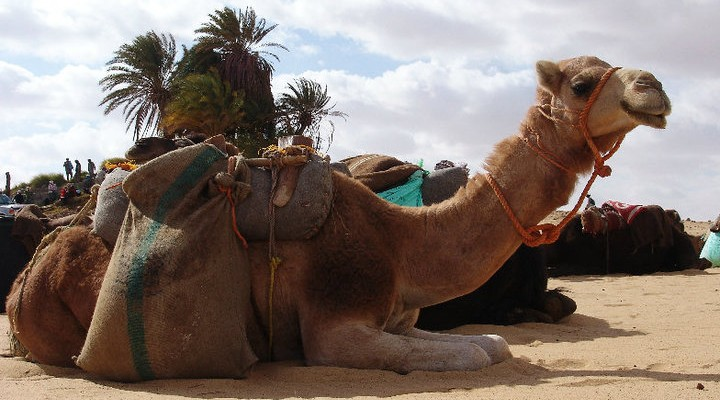 desert tour, sand-boarding, camels, horses from $525 in one week Slide 13