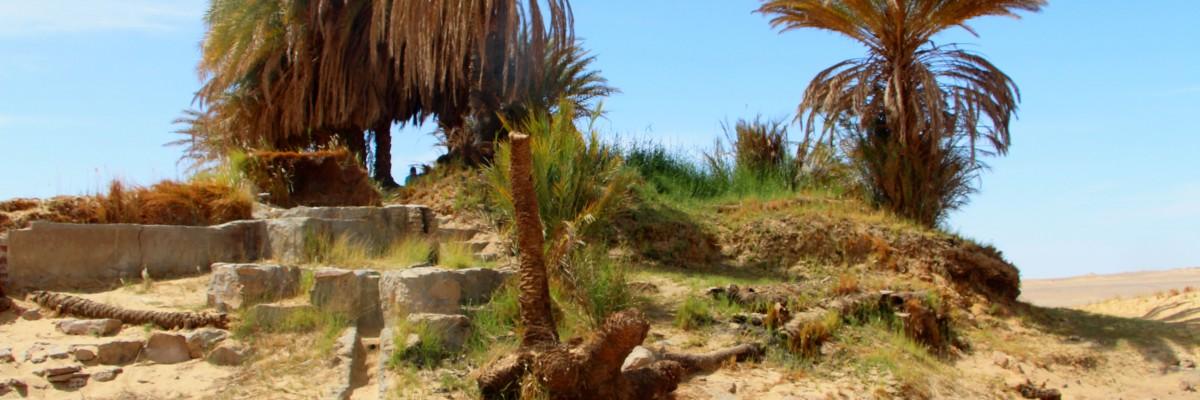 eine woche in der Wüste sandboarden, pferde, kamele und mehr ab €450 Slide 1
