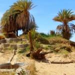 eine woche in der Wüste sandboarden, pferde, kamele und mehr ab €450