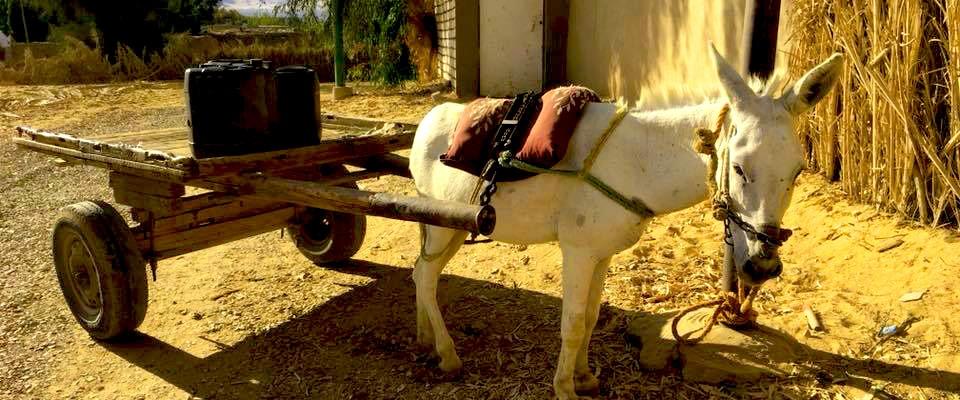 eine woche in der Wüste sandboarden, pferde, kamele und mehr ab €450 Slide 13