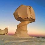 Die weisse wüste